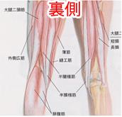 大腿後面の筋
